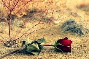 Musibah Besar Saat Terbunuhnya Umar