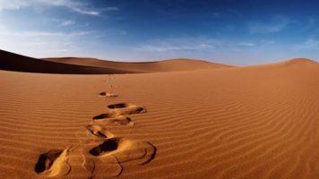 Musibah Besar Saat Meninggalnya Umar (bag ke-2)